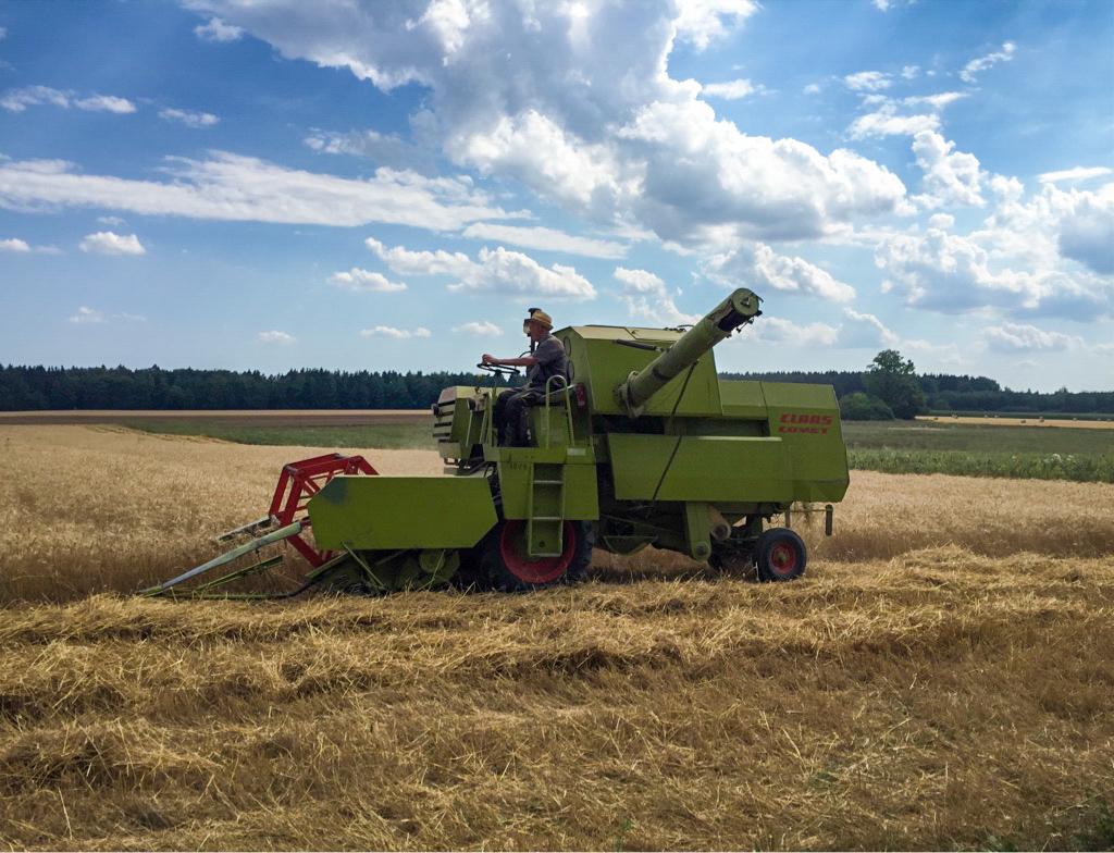 Bio-Getreideernte im Juli 2018